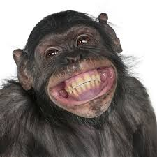 smilechimp